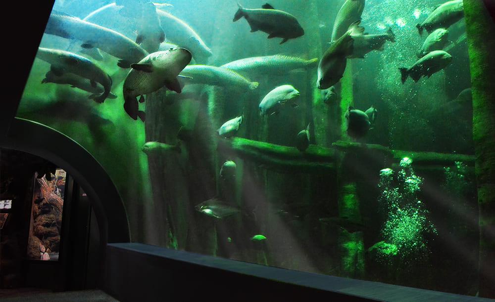 Fluvial Aquarium of Zaragoza