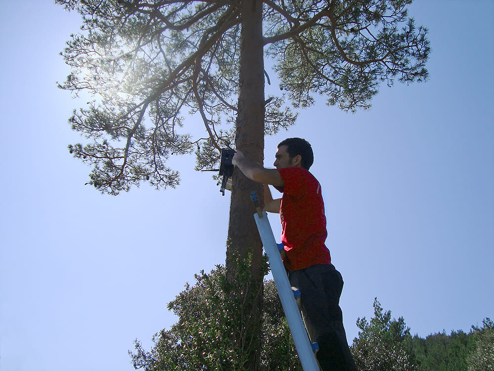 Installing sensor nodes in optimal locations for forest fire detection