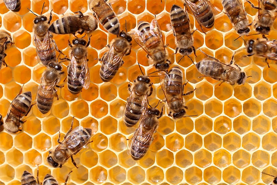 Image result for Bee hive images