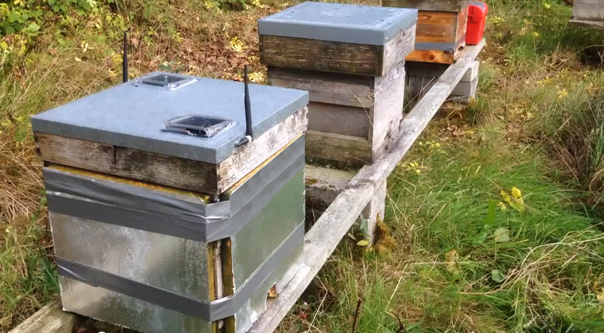 Monitoring Beehives - Waspmote Smart Beehives