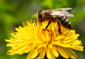 Reading Beehives: Smart Sensor Technology Monitors Bee Health and Global Pollination