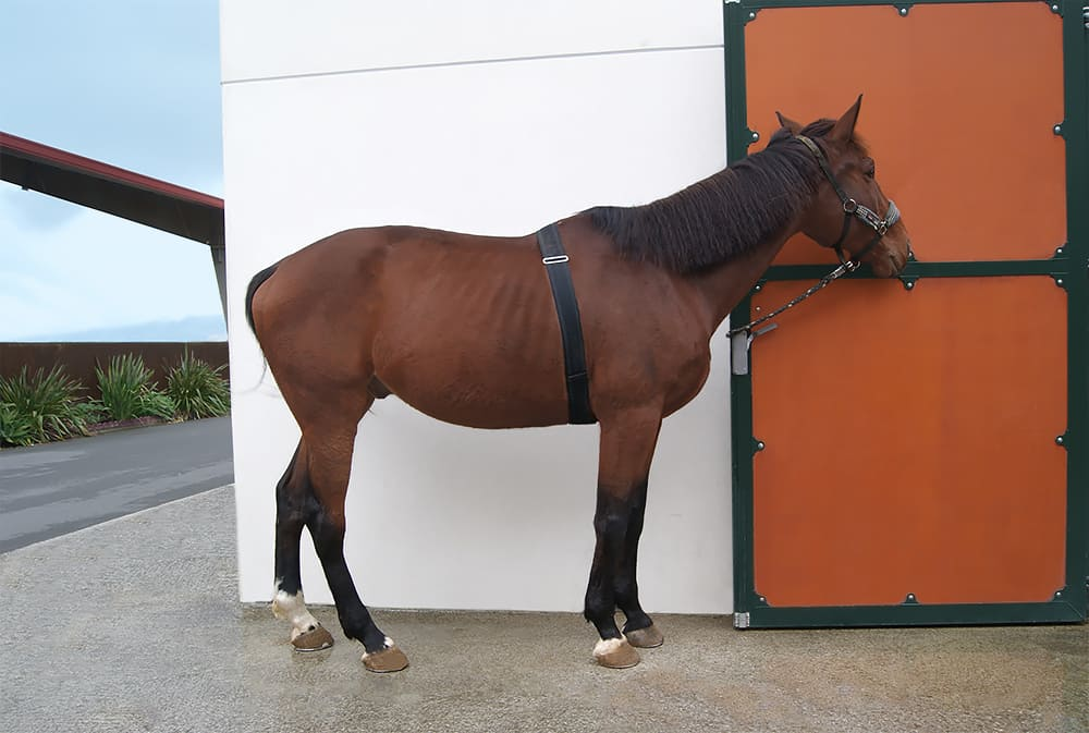 Horse mote sensors are worn by the horse without restricting movement