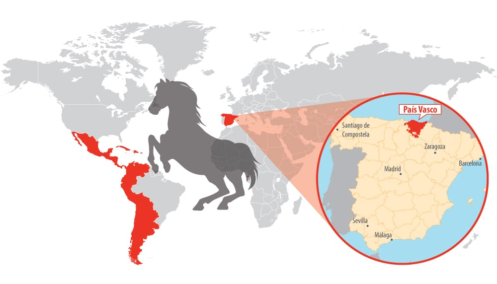 Since 1500 Spanish horses made their way into the ancestry of many breeds founded in North and South America