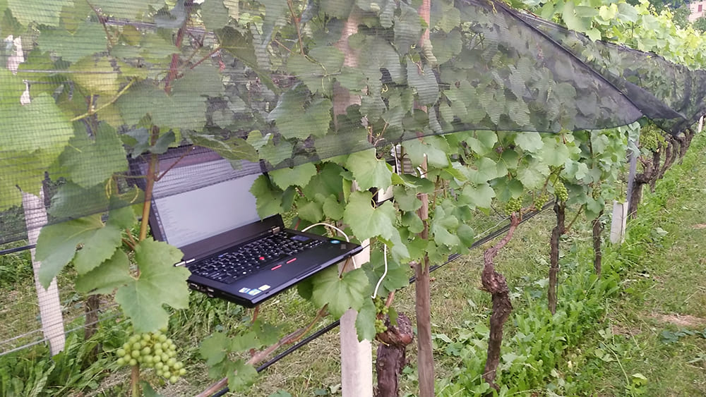 PreDiVine Vineyard Installation