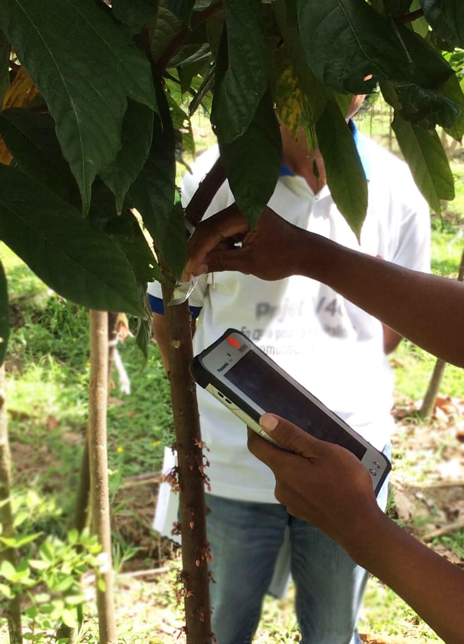 FWMS-Tree-Tagging