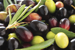 Monitoring weather conditions to prevent pest in olives