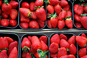 Smart Strawberries Crop Increases the Quality and Reduces the Time from Farm to Market