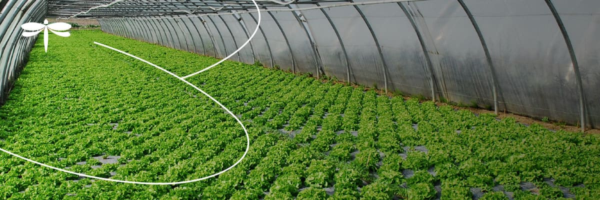 White Paper: Enabling the Smart Agriculture Revolution