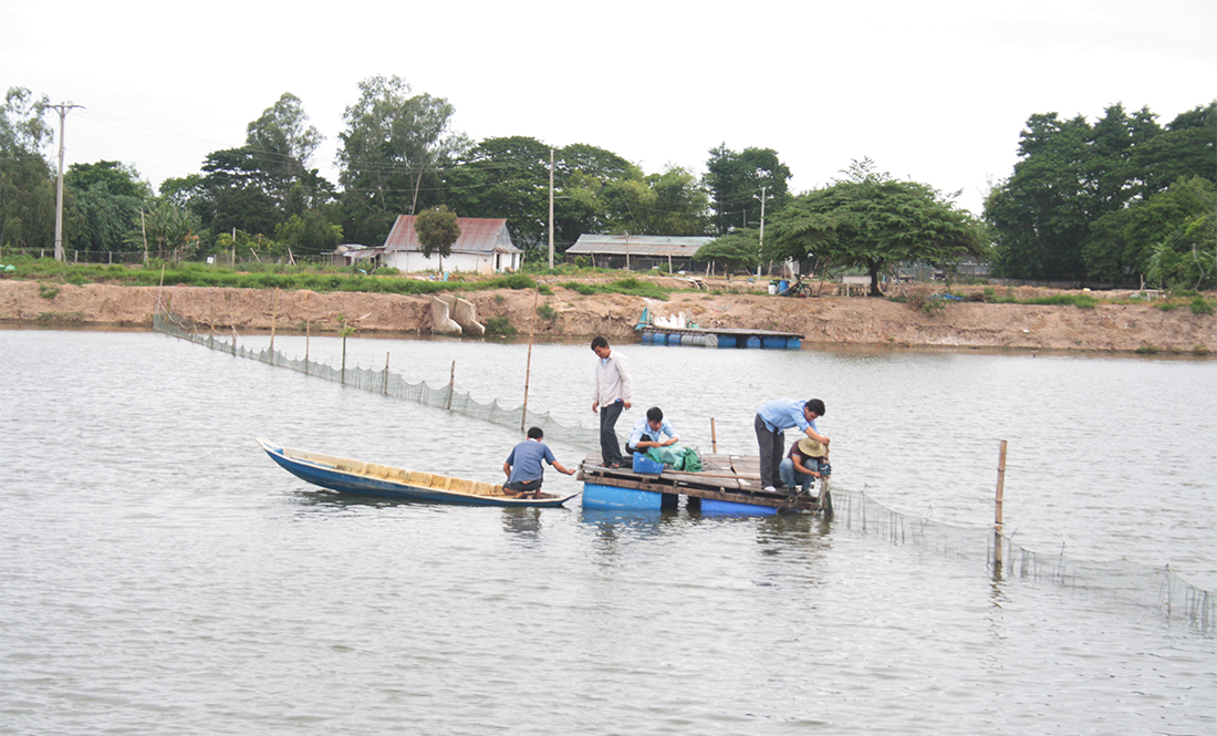 Fish farm monitoring in vietnam by controlling water for Koi pond temperature