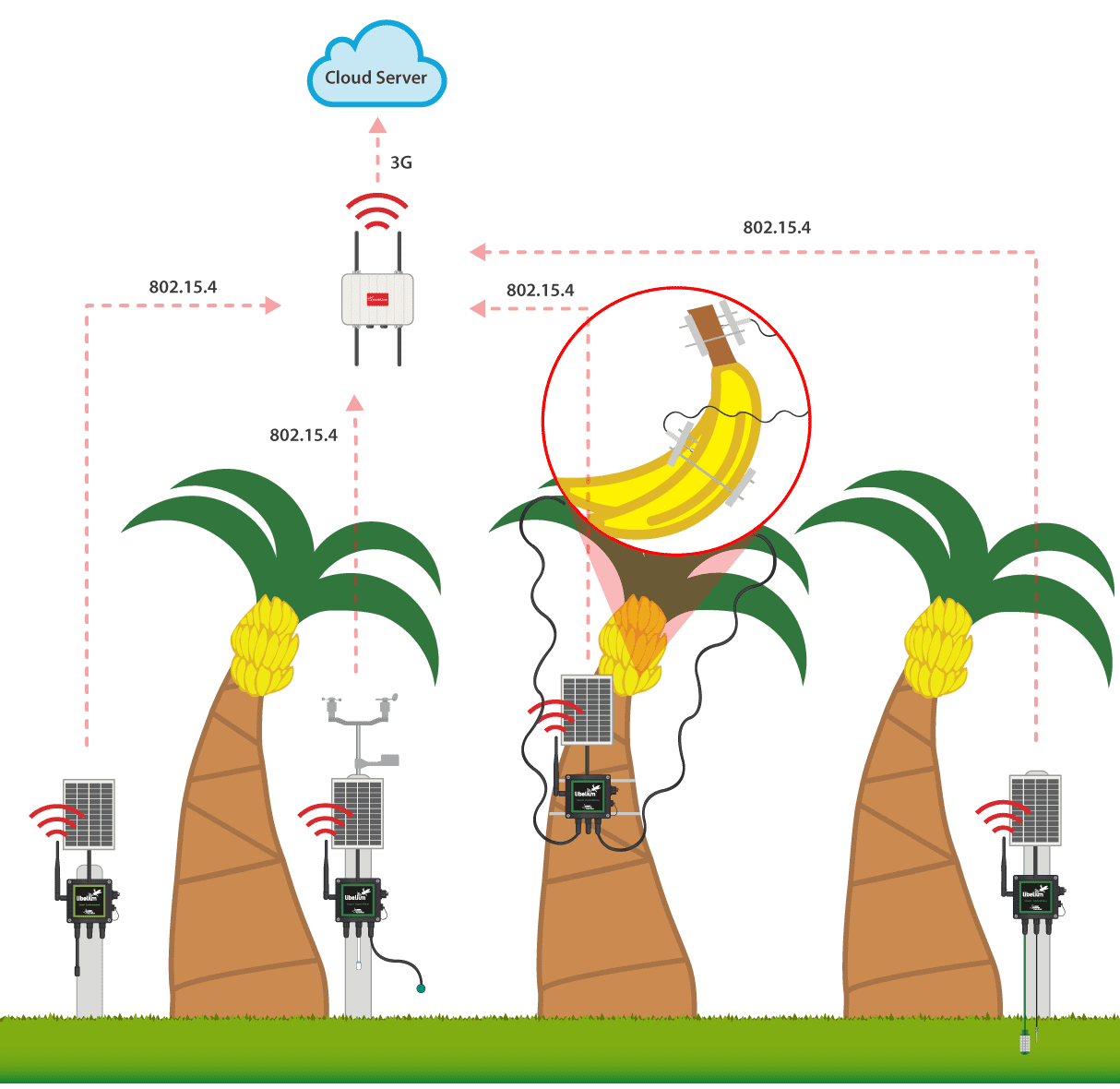 Plantain crops deployment functioning diagram