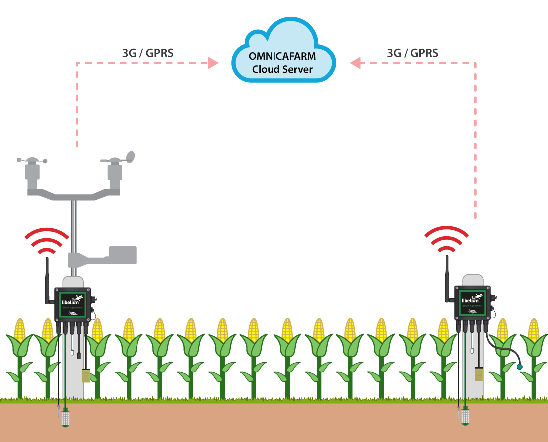Corn crops deployment functioning diagram