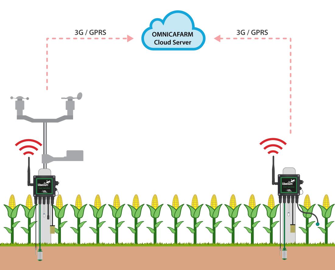 Corn crops deployment functioning diagram