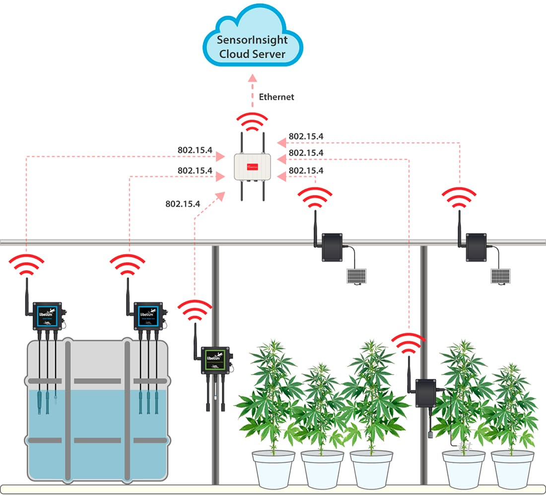 Indoor Precision Farming deployment for medical marijuana plantations in Phoenix
