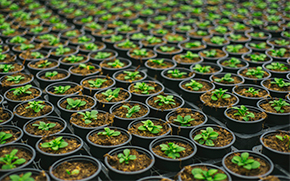 Smart Agriculture project in an Australian nursery to ensure crops health and reduce losses