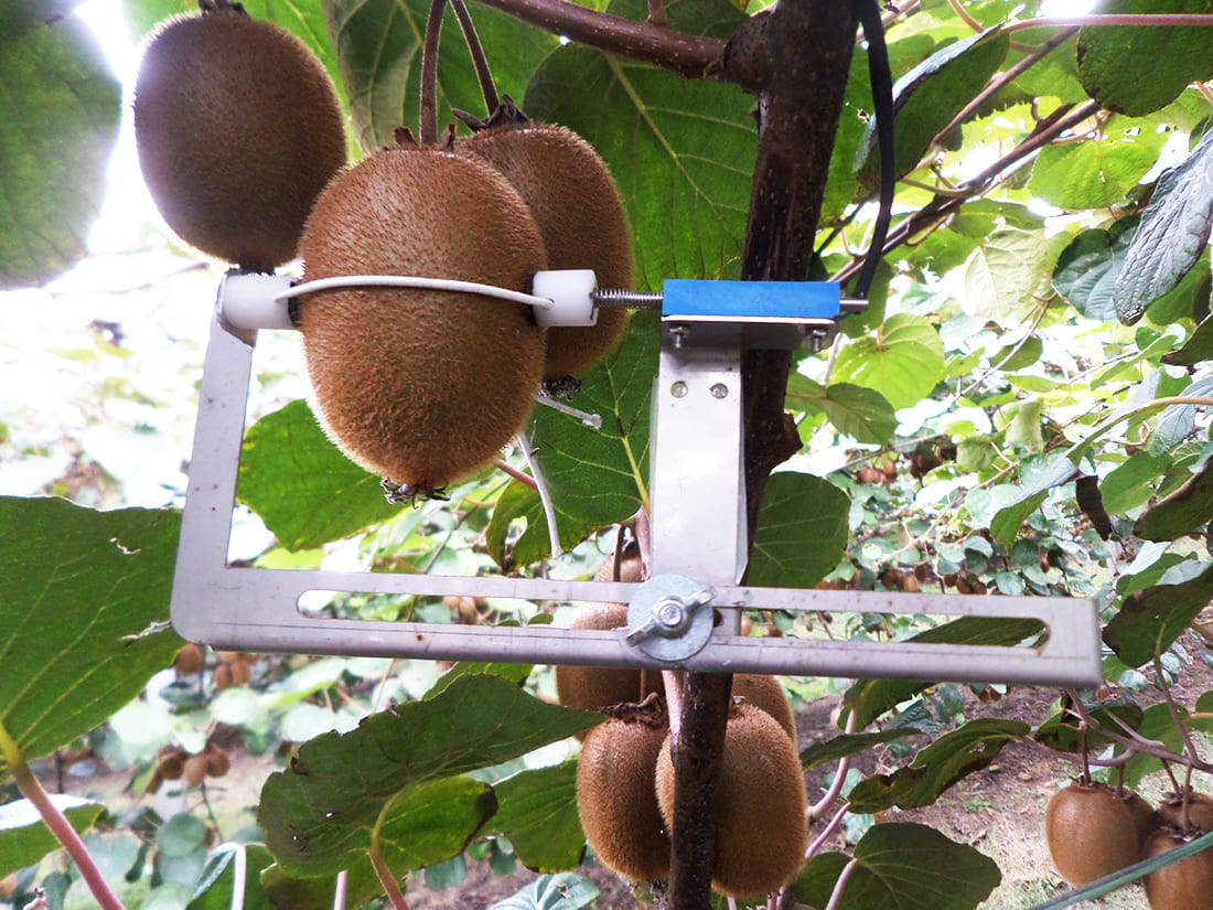 Fruit diameter sensor