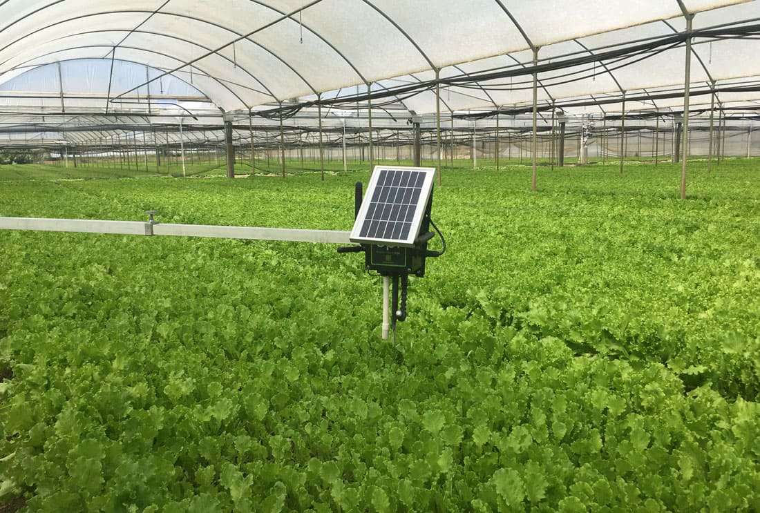 Waspmote Plug & Sense! Smart Agriculture in greenhouse installation