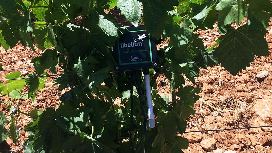 Waspmote Plug & Sense! Smart Agriculture PRO on grape level
