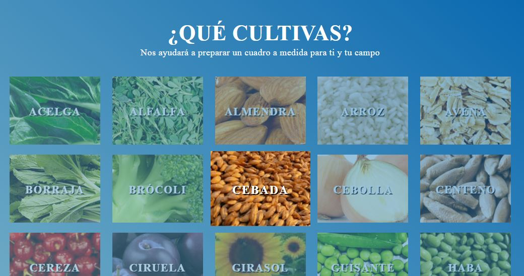 """What do you cultivate?"" – Agrotech project"