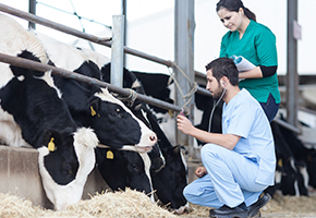image How a dairy farm increased their milk production 18% with IoT and Machine Learning