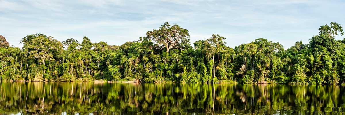 Smart Amazonas Banner
