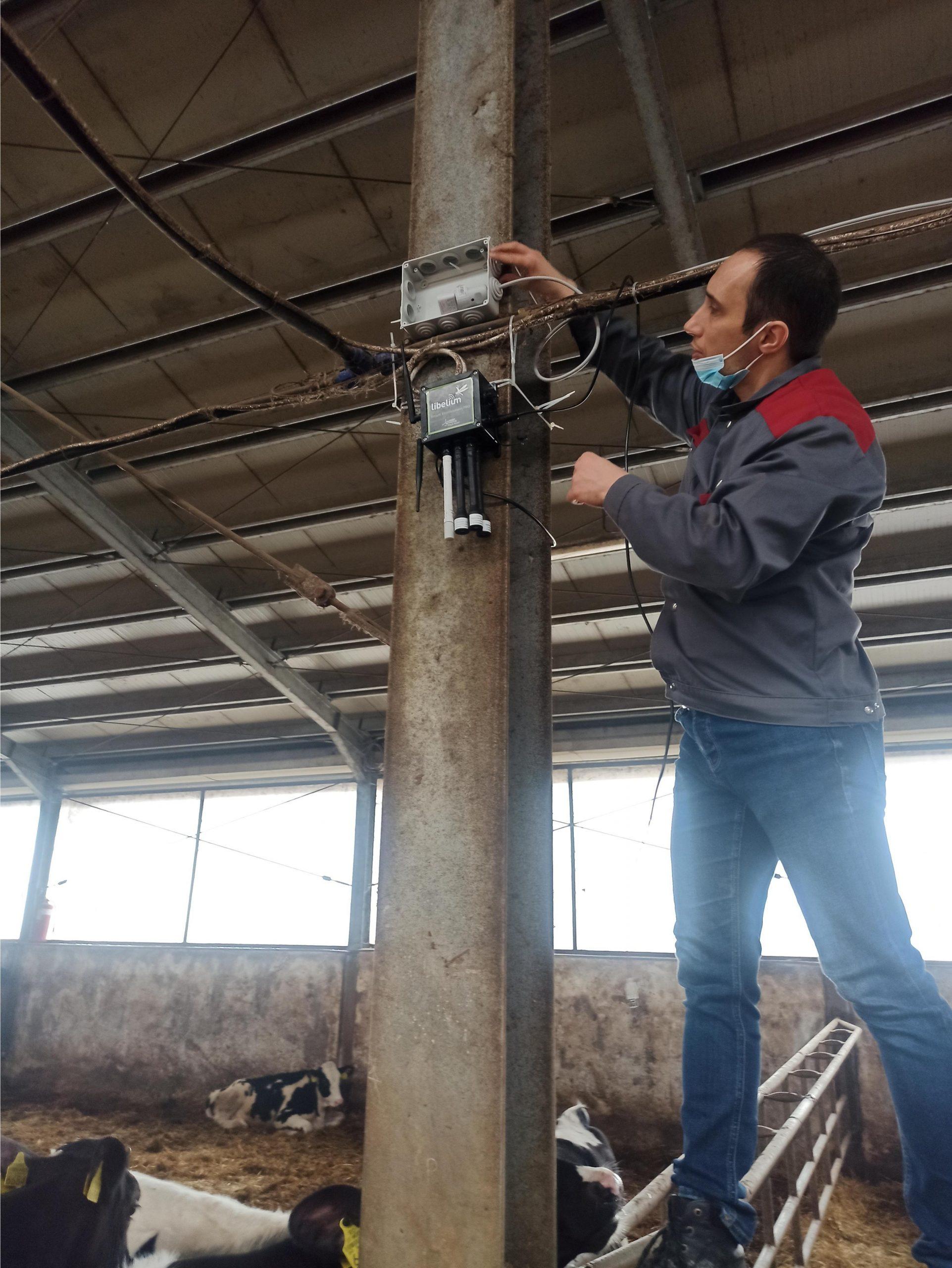 methane control in farm cow