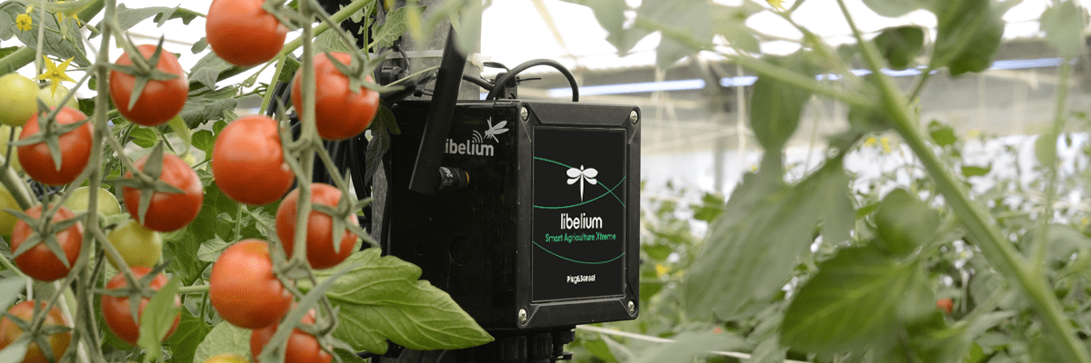 Precision agriculture in organic crops